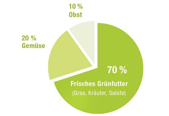 Frischfutter für Zwergkaninchen sollte sich am besten zu 70 Prozent aus Grünfutter, zu 20 Prozent aus Gemüse und zu zehn Prozent aus Obst zusammensetzen.