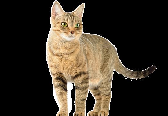 Katzen liegen Daniela Katzenberger am Herzen.