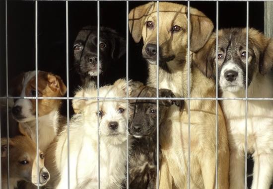 Im Tierheim Smeura in Rumänien leben Tausende Hunde.