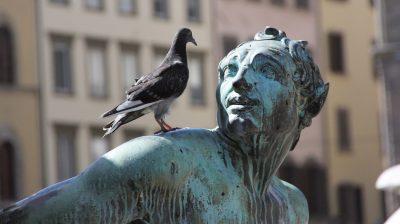 Taube auf Statue