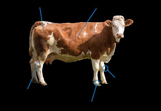 Kuh Tierschutzlabel