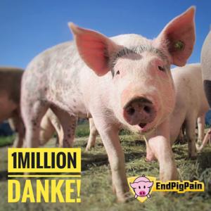 Danke für eine Million Stimmen gegen das Schweineleid.