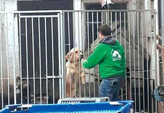 Bei einem Animal-Hoarding-Fall in der bayrischen Stadt Rain im November 2018 fanden Mitarbeiter des Tierheims Hamlar Dutzende verwahrloste Hunde vor.