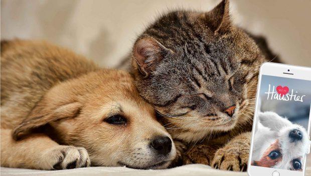 Hund, Katze und die App Mein Haustier
