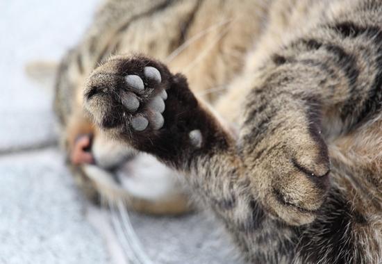 Einen kurzen Moment nicht aufgepasst, kann es passieren, dass der eigene Hund oder die Katze etwas fressen, was für sie giftig ist.