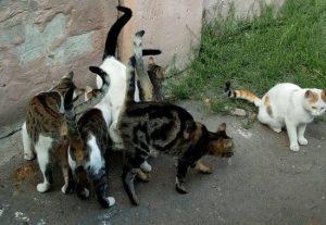 Straßenkatzen in Odessa