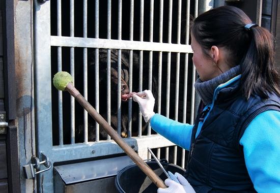 Mit dem Klickertraining werden die Bären zum Beispiel auch auf zahnmedizinische Untersuchungen vorbereitet. Durch das Klickgeräusch und eine Belohnung werden sie positiv konditioniert und öffnen wie hier freiwillig die Schnauze.
