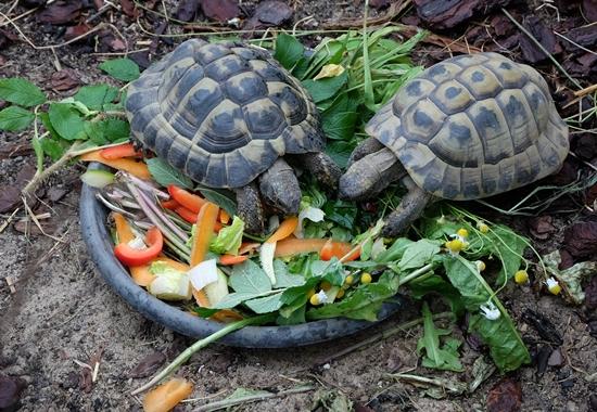 Im vergangenen Jahr hat das Tierschutzzentrum besonders viele Land-, Schmuck- und Höckerschildkröten aufgenommen.