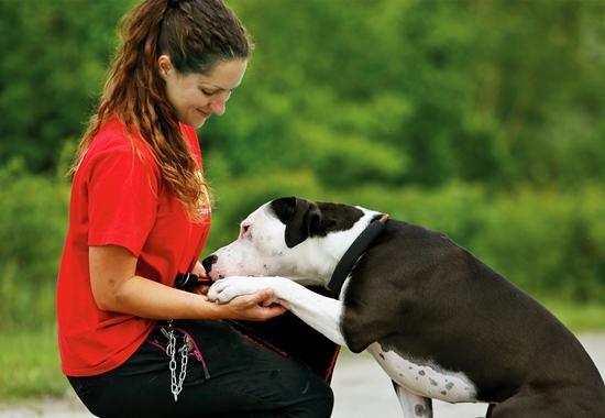 Viele Listenhunde, die im Tierheim landen, sind besonders sensibel. Sie brauchen viel Betreuung und intensives Training. Im Berliner Tierheim kümmert sich Tierärztin Xenia Katzurke mit ihren Kollegen um die vorverurteilten Tiere.