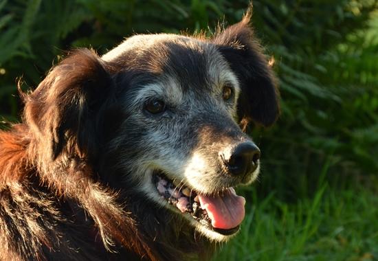 Wenn Tiere wie dieser Hund noch Lebensfreude ausstrahlen, ist das ein gutes Zeichen.