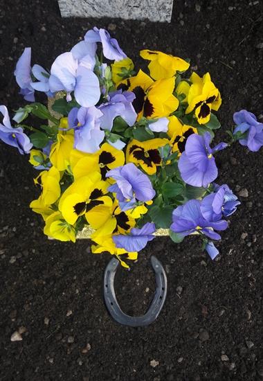 Dr. Esther Müller hat die Urne ihres Pferdes Delano im Garten ihrer Eltern beigesetzt.