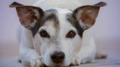Hund für die Aktion #MeinTierheimtier