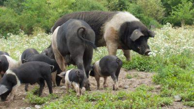 Die Arche Warder zeigt, dass Landwirtschaft auch anders geht.