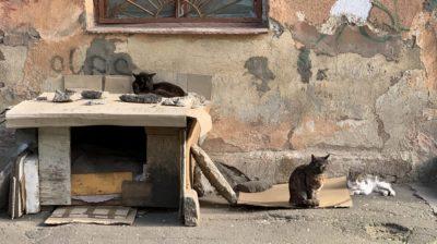 Straßenkatzen in Odessa in der Ukraine
