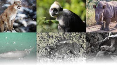 Das Artensterben bedroht unzählige Tier- und Pflanzenarten.