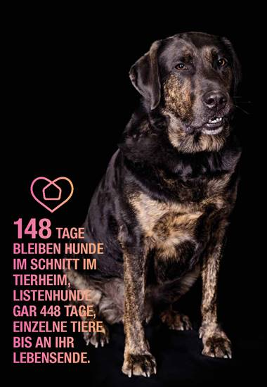 148 Tage bleiben Hunde im Schnitt im Tierheim, Listenhunde gar 448 Tage, einzelne Tiere bis an ihr Lebensende.