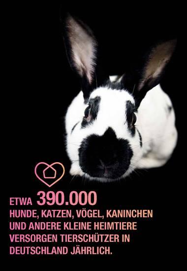 Etwa 390.000 Hunde, Katzen, Vögel, Kaninchen und andere kleine Heimtiere versorgen Tierschützer in Deutschland jährlich.