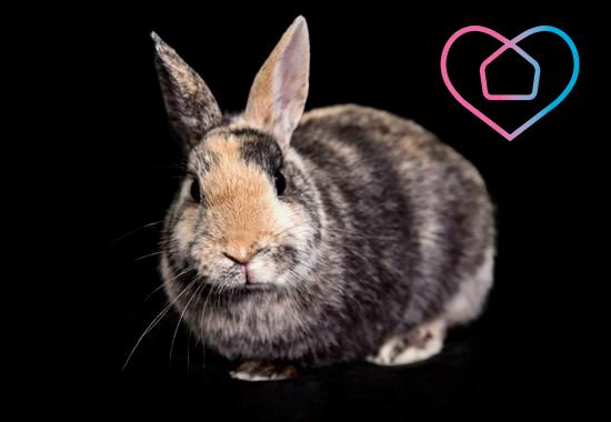 Ob ausgesetzt, abgegeben oder beschlagnahmt - Tierheime erwarten die Tiere mit liebevollen schützenden Händen.
