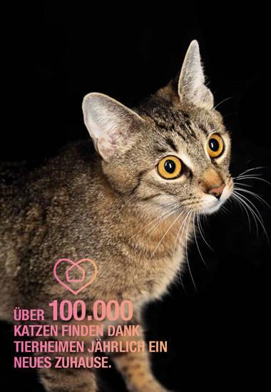 Über 100.000 Katzen finden dank Tierheimen jährlich ein neues Zuhause.