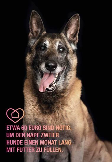 Etwa 60 Euro sind nötig, um den Napf zweier Hunde einen Monat lang mit Futter zu füllen.