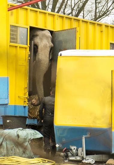 Die ständigen Transporte und die Unterbringung in Käfigwagen und winzigen Innengehegen sind Alltag für Zirkustiere.