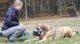 Hundetrainerin Lisa Scheele trainiert intensiv mit den tierischen Schützlingen.