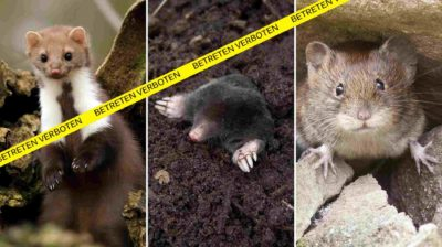 Marder Maulwurf Maus
