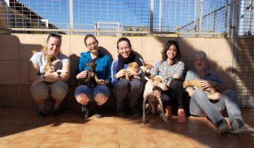 Mitarbeiterinnen des Deutschen Tierschutzbundes zu Besuch auf Teneriffa