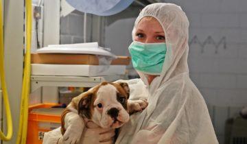 Tierheim während der Corona-Pandemie