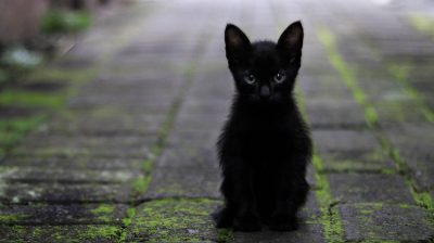 Schwarzes Kätzchen sitzt auf dem Gehweg