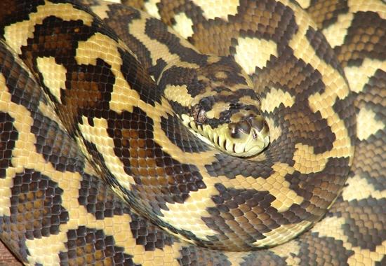 Nach einer Beschlagnahmung nahm das Tierheim Leipzig 27 Schlangen auf.