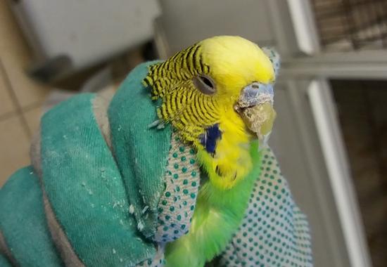 33 Vögel hat das Tierheim Nürnberg aus einem Animal-Hoarding-Haushalt aufgenommen.